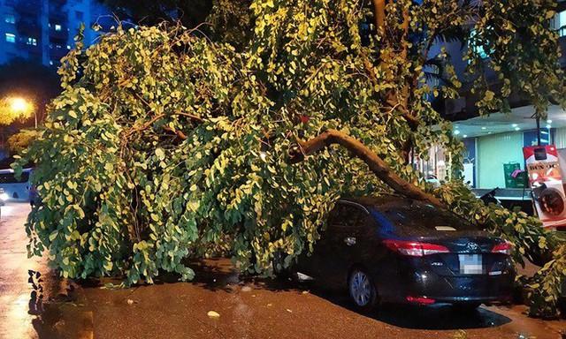 Xôn xao loạt cây xanh bật gốc lộ nguyên vỏ bọc rễ sau mưa dông ở Linh Đàm - Ảnh 14.