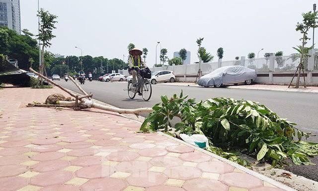 Xôn xao loạt cây xanh bật gốc lộ nguyên vỏ bọc rễ sau mưa dông ở Linh Đàm - Ảnh 5.