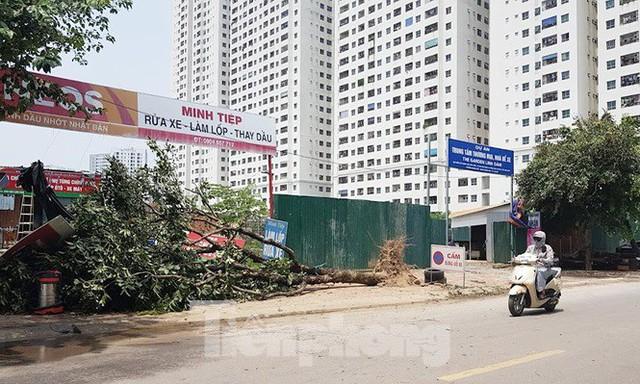 Xôn xao loạt cây xanh bật gốc lộ nguyên vỏ bọc rễ sau mưa dông ở Linh Đàm - Ảnh 8.