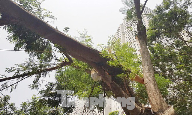 Xôn xao loạt cây xanh bật gốc lộ nguyên vỏ bọc rễ sau mưa dông ở Linh Đàm - Ảnh 9.