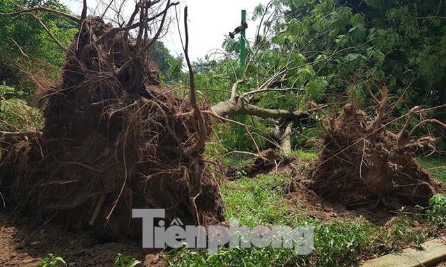 Xôn xao loạt cây xanh bật gốc lộ nguyên vỏ bọc rễ sau mưa dông ở Linh Đàm - Ảnh 10.