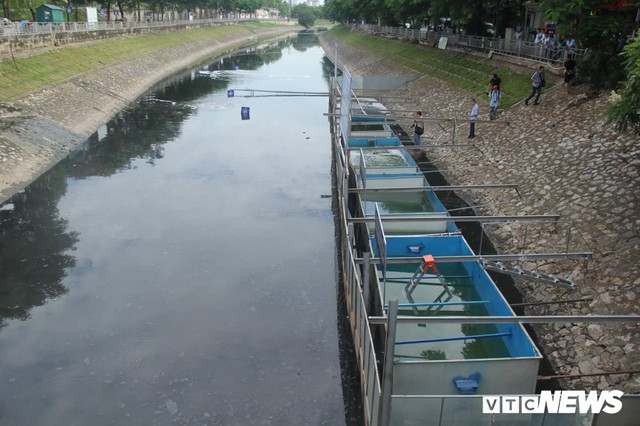 Chuẩn bị thả cá Koi Nhật và cá chép Việt xuống sông Tô Lịch và Hồ Tây - Ảnh 1.