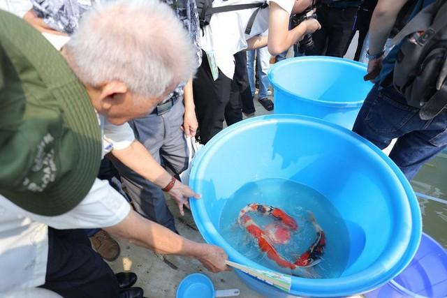 Clip: Thả 100 con cá Koi Nhật Bản xuống đoạn sông Tô Lịch làm sạch và Hồ Tây  - Ảnh 3.