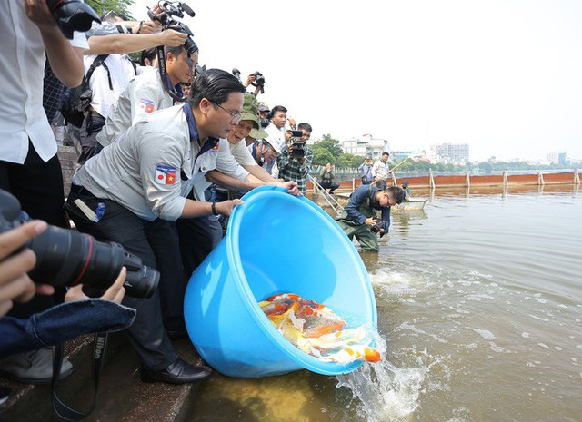 Clip: Thả 100 con cá Koi Nhật Bản xuống đoạn sông Tô Lịch làm sạch và Hồ Tây  - Ảnh 7.