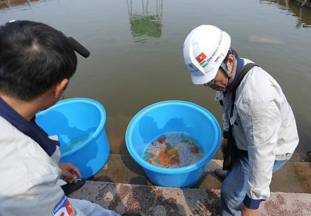 Clip: Thả 100 con cá Koi Nhật Bản xuống đoạn sông Tô Lịch làm sạch và Hồ Tây  - Ảnh 8.