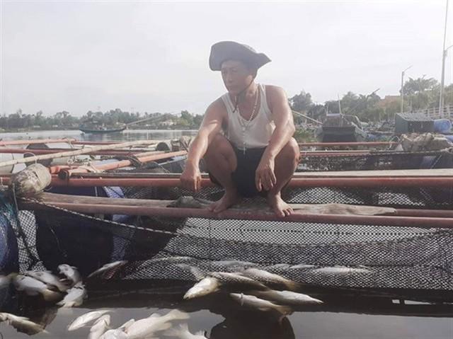 Đã xác định được nguyên nhân cá lồng bè ở Hà Tĩnh chết đột ngột - Ảnh 1.
