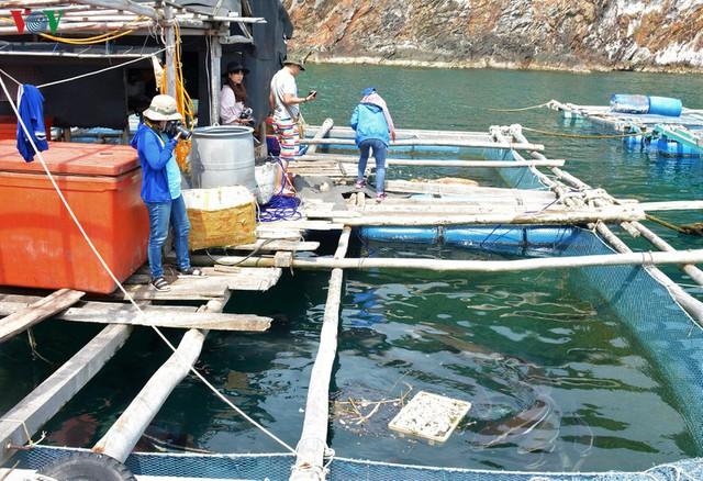 Khám phá nghề nuôi cá lồng bè thu tiền tỷ ở Nam Du - Ảnh 10.