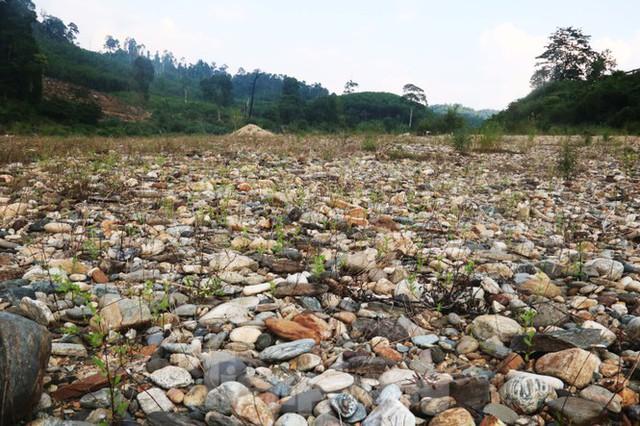 Những dòng sông chết dưới chân đập thủy điện Đắk Mi 4 - Ảnh 13.