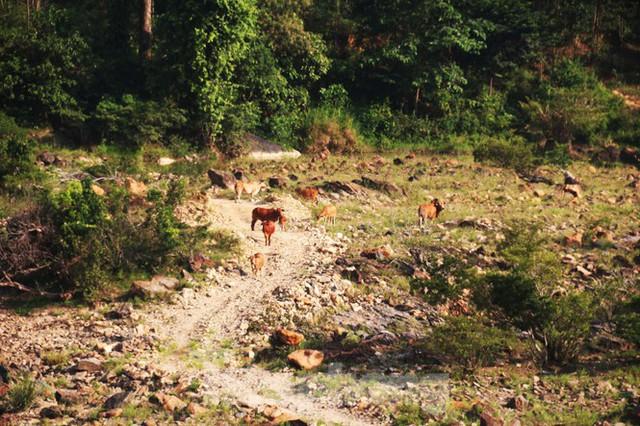Những dòng sông chết dưới chân đập thủy điện Đắk Mi 4 - Ảnh 15.