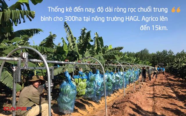 Rót hơn tỷ USD vào HAGL: Chuyện chẳng đùa và giấc mơ khủng về hệ sinh thái nông nghiệp của tỷ phú Trần Bá Dương (Kỳ 2) - Ảnh 5.