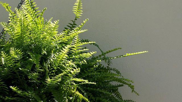 Bạn khỏi cần sợ không khí ô nhiễm khi biết trồng 1 trong 15 loại cây này trong nhà - Ảnh 1.