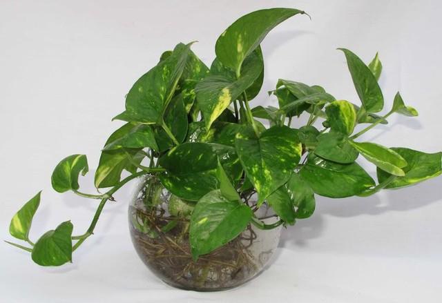 Bạn khỏi cần sợ không khí ô nhiễm khi biết trồng 1 trong 15 loại cây này trong nhà - Ảnh 7.