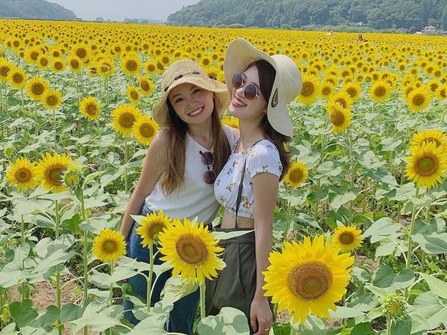 """""""Choáng váng"""" với cánh đồng hoa hướng dương triệu bông đẹp như bức tranh khổng lồ vào mùa thu ở Nhật Bản - Ảnh 9."""