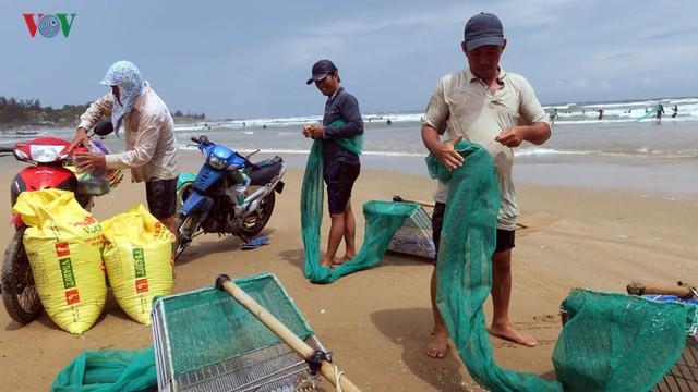 Mùa chằng chằng giúp người dân Bình Thuận kiếm tiền triệu mỗi ngày - Ảnh 12.