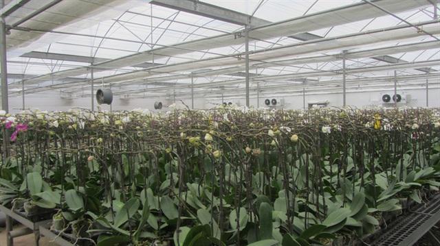 Hoa, cây cảnh Văn Giang thu 1.000 tỷ đồng - Ảnh 1.
