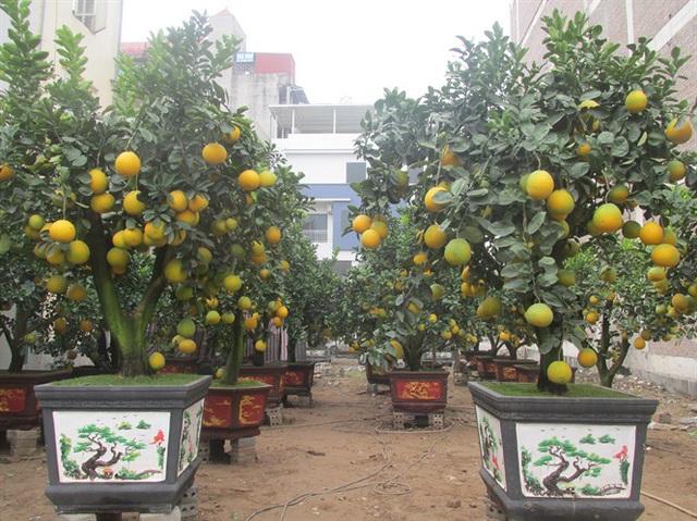 Hoa, cây cảnh Văn Giang thu 1.000 tỷ đồng - Ảnh 2.