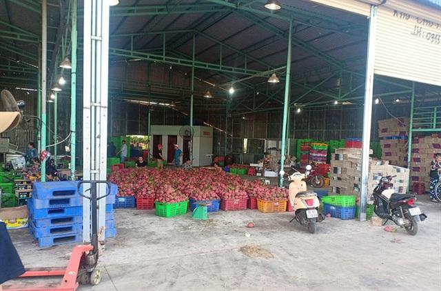 Bình Thuận: Giá thanh long dịp tết ở mức thấp, nông dân buồn lo - Ảnh 3.