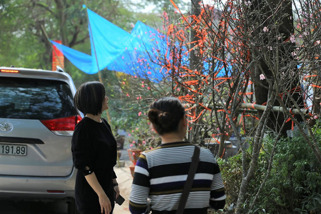 Vượt 300km về Hà Nội, đào rừng không lá không hoa hét giá khó tin gần 200 triệu đồng - Ảnh 10.