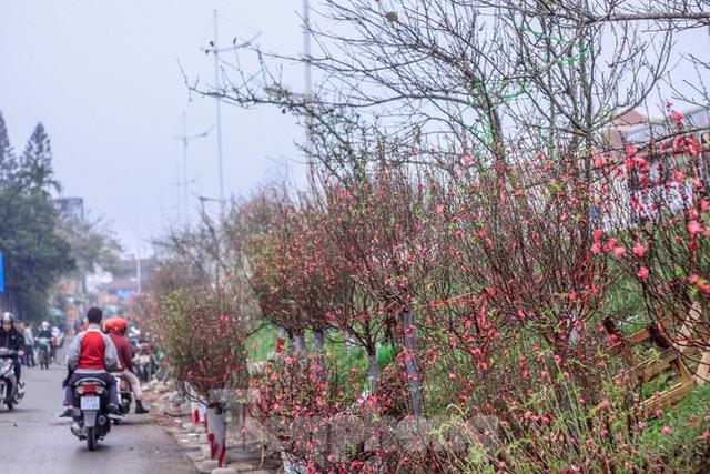 Không khí Tết ngập tràn phố phường Thủ đô - Ảnh 13.