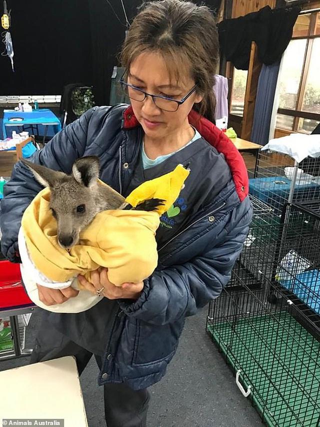 Úc: Mưa cà rốt và khoai lang cứu đói động vật bị cháy rừng  - Ảnh 7.