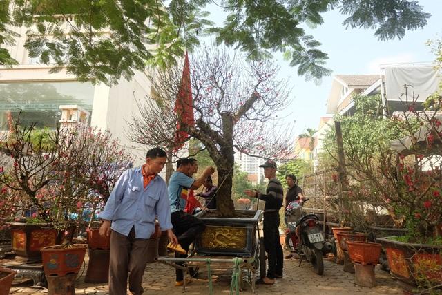 Dân buôn nhấp nhổm sợ mất Tết vì đào cảnh nở gần hết hoa, dài cổ chờ khách - Ảnh 12.