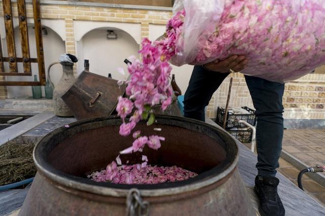 Câu chuyện về những bông hồng thơm nhất thế giới của Iran: Cả một thị trấn toàn hoa hồng, người dân làm một tháng là đủ tiền tiêu cả năm không hết - Ảnh 13.
