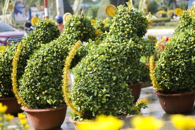 Quất bonsai tạo hình chuột khuấy động chợ hoa Tết - Ảnh 2.