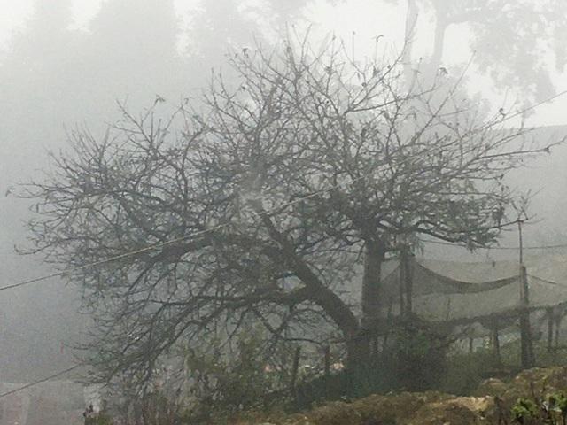 Lên Lai Châu săn đào rừng, bán liền tay lãi ngay trăm triệu - Ảnh 1.
