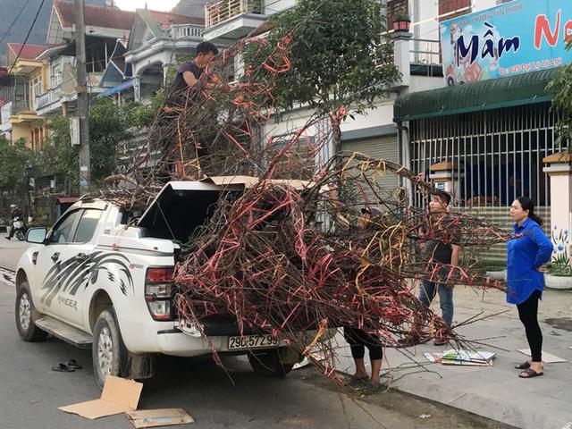 Lên Lai Châu săn đào rừng, bán liền tay lãi ngay trăm triệu - Ảnh 14.