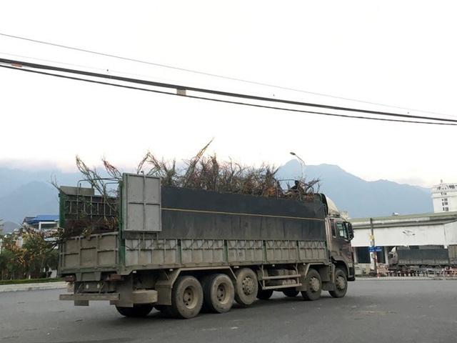 Lên Lai Châu săn đào rừng, bán liền tay lãi ngay trăm triệu - Ảnh 18.
