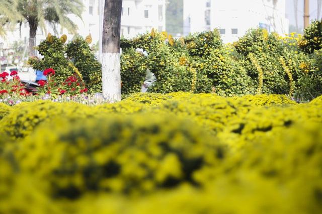 Quất bonsai tạo hình chuột khuấy động chợ hoa Tết - Ảnh 3.