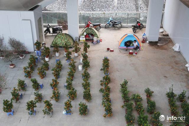 Vỉa hè, sân nhà ga đường sắt trên cao Cát Linh - Hà Đông thành chợ hoa Tết - Ảnh 10.