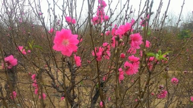 Những cây hoa hợp phong thủy không thể thiếu trong nhà ngày Tết - Ảnh 1.