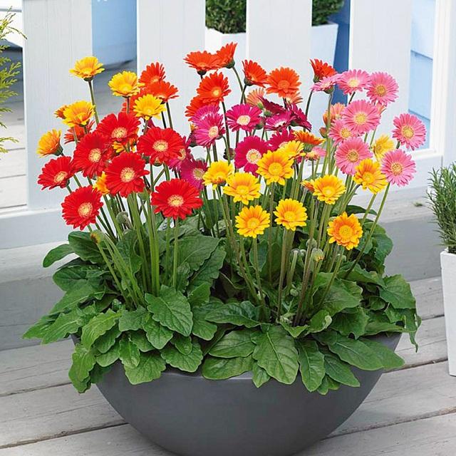 Những cây hoa hợp phong thủy không thể thiếu trong nhà ngày Tết - Ảnh 5.