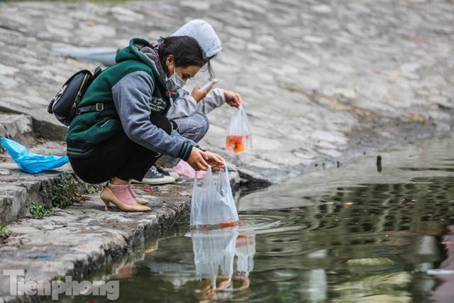 Cá chép vàng tiễn ông Táo vừa thả đã chết nổi ở hồ Hoàng Cầu - Ảnh 1.