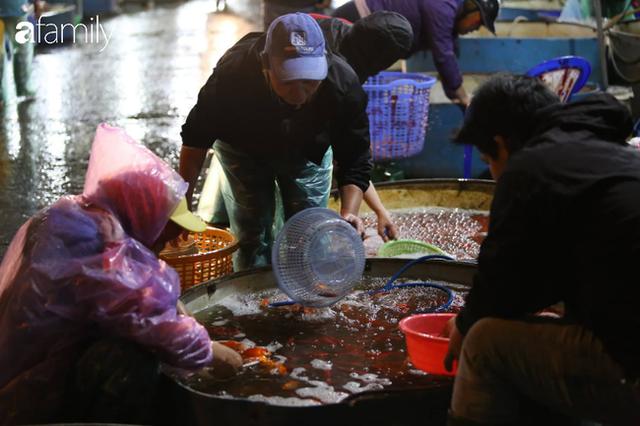 Ngày ông Công ông Táo, chợ cá lớn nhất Hà Nội cháy hàng cá chép từ rạng sáng - Ảnh 11.