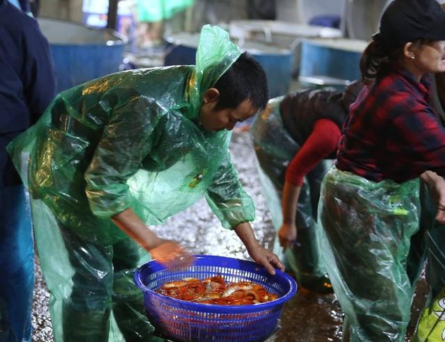 Ngày ông Công ông Táo, chợ cá lớn nhất Hà Nội cháy hàng cá chép từ rạng sáng - Ảnh 12.