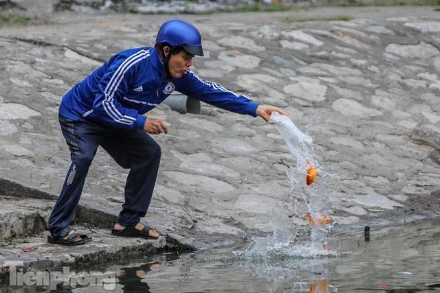 Cá chép vàng tiễn ông Táo vừa thả đã chết nổi ở hồ Hoàng Cầu - Ảnh 13.