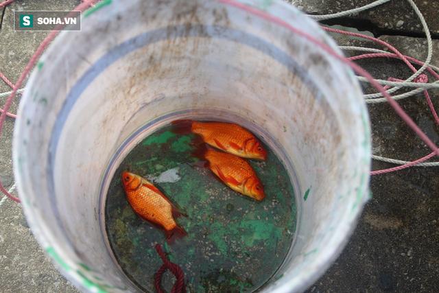 [Ảnh] Độc đáo ở Hà Nội: Thả cá chép qua máng trượt tiễn ông Công ông Táo về trời - Ảnh 17.