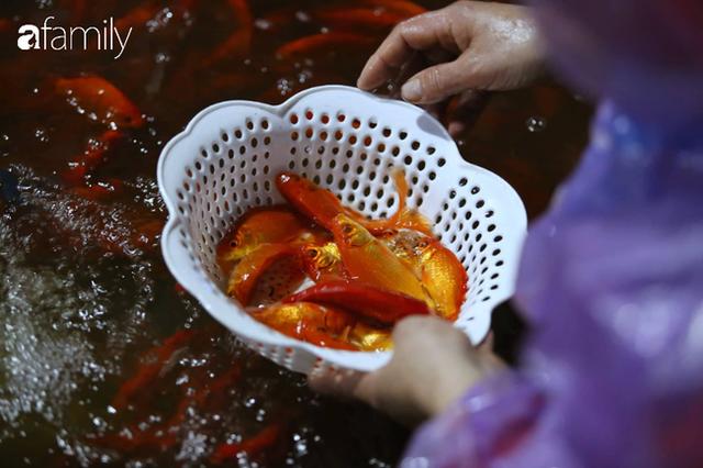 Ngày ông Công ông Táo, chợ cá lớn nhất Hà Nội cháy hàng cá chép từ rạng sáng - Ảnh 5.