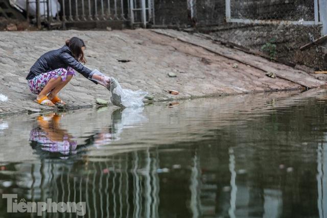 Cá chép vàng tiễn ông Táo vừa thả đã chết nổi ở hồ Hoàng Cầu - Ảnh 5.