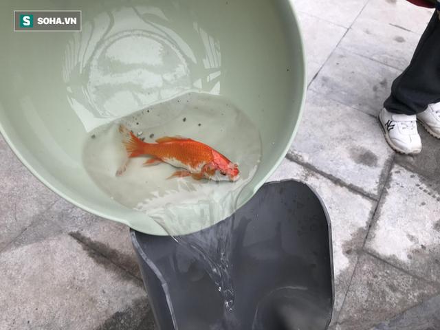 [Ảnh] Độc đáo ở Hà Nội: Thả cá chép qua máng trượt tiễn ông Công ông Táo về trời - Ảnh 5.