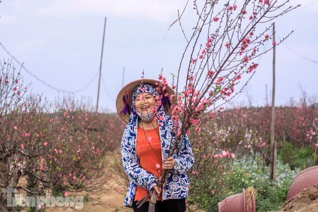 Đào bung nở sớm, người dân Nhật Tân thấp thỏm lo trắng tay - Ảnh 6.