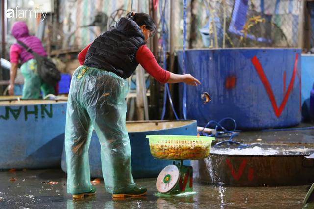 Ngày ông Công ông Táo, chợ cá lớn nhất Hà Nội cháy hàng cá chép từ rạng sáng - Ảnh 8.