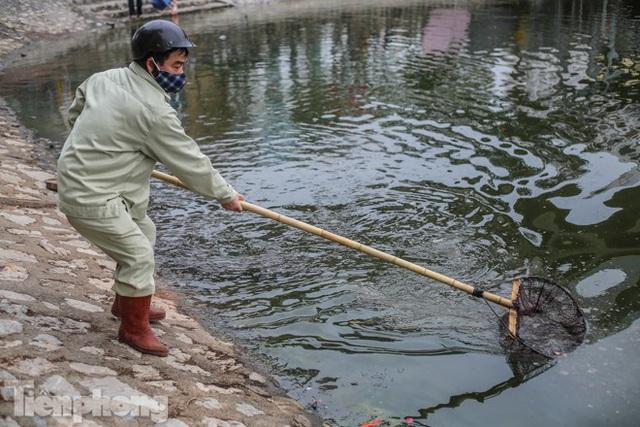 Cá chép vàng tiễn ông Táo vừa thả đã chết nổi ở hồ Hoàng Cầu - Ảnh 9.