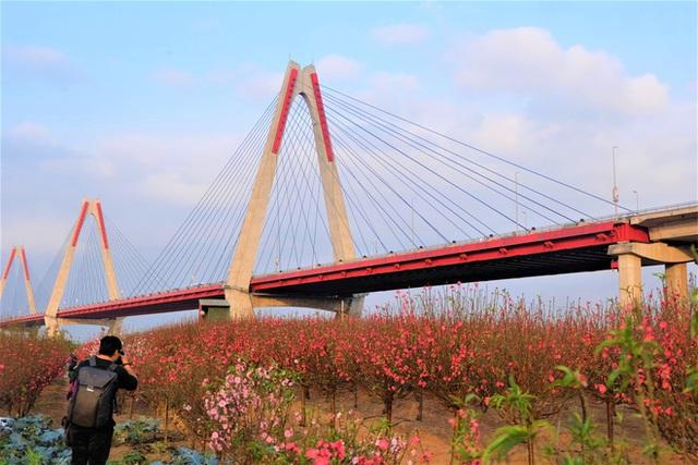 Xót xa vựa đào Nhật Tân nở hoa đỏ rực trước Tết, người dân ngậm ngùi hái bỏ cả nghìn bông - Ảnh 16.