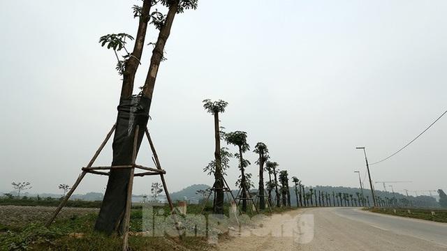 Hàng hoa sữa chuyển từ Hà Nội lên bãi rác Nam Sơn giờ ra sao? - Ảnh 1.