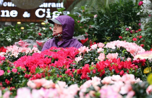 Mặc thời tiết mưa rét, người dân chen chân mua hoa Tết tại chợ hoa lâu đời nhất Hà Nội - Ảnh 3.