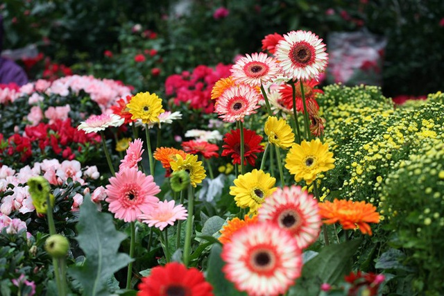 Mặc thời tiết mưa rét, người dân chen chân mua hoa Tết tại chợ hoa lâu đời nhất Hà Nội - Ảnh 4.