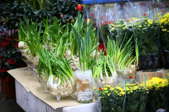 Mặc thời tiết mưa rét, người dân chen chân mua hoa Tết tại chợ hoa lâu đời nhất Hà Nội - Ảnh 5.